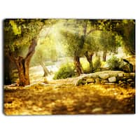 Designart - Olive Trees  Photography Canvas Art Print - YELLOW
