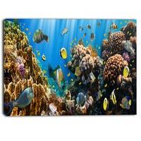 Designart - Coral Colony Panorama - Photography Canvas Art Print