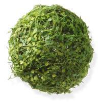 National Tree Company Moss and Mini Leaves 8-inch Ball