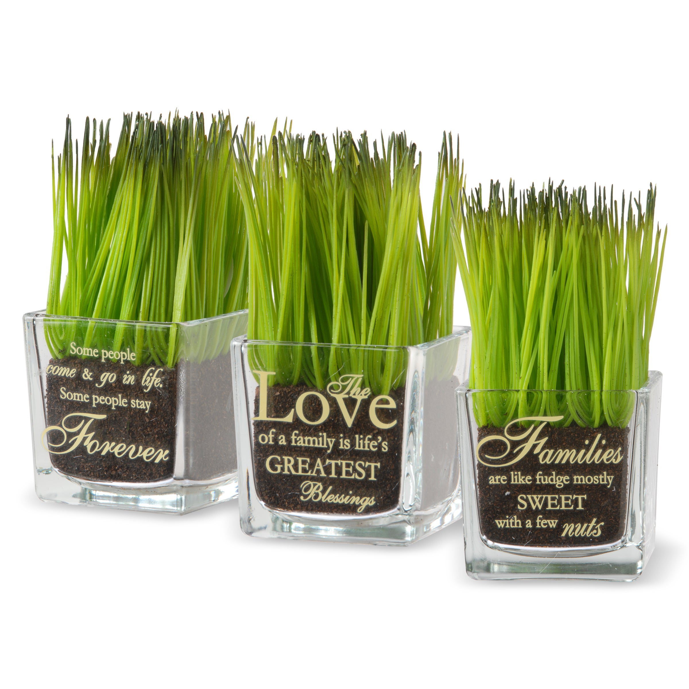 National Tree Company Family Printed Square Glass Pot with Artificial Grass (Set of 3) (Clear)