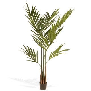 National Tree Company 69-inch Kentia Palm Potted Tree