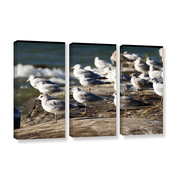 ArtWall Cody York's Pigeons, 3 Piece Gallery Wrapped Canvas Set