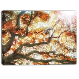 Designart - Big Tree - Photography Canvas Art Print