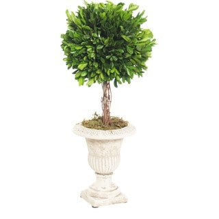 Preserved Collection 18-inch Boxwood Topiary Set
