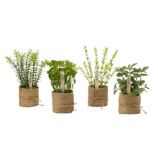 Herb Collection 9.5-inch Herb Faux Plant Set