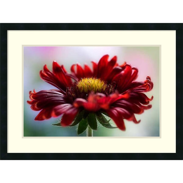 Framed Art Print Flame By Mandy Disher 32 X 24 Inch Free