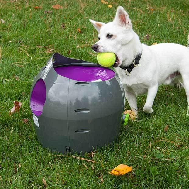 Petsafe Automatic Ball Launcher (Grey)