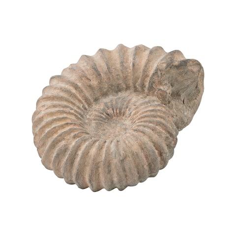 Dimond Home Cretaceous Ancient Shell Sculpture