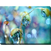 Sharon Johnstone 'Rainbow Moss Drops' Giclee Print Canvas Wall Art