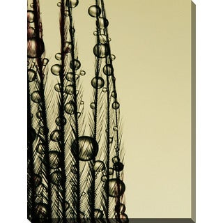 Sharon Johnstone 'Charcoal Feather Drops' Giclee Print Canvas Wall Art