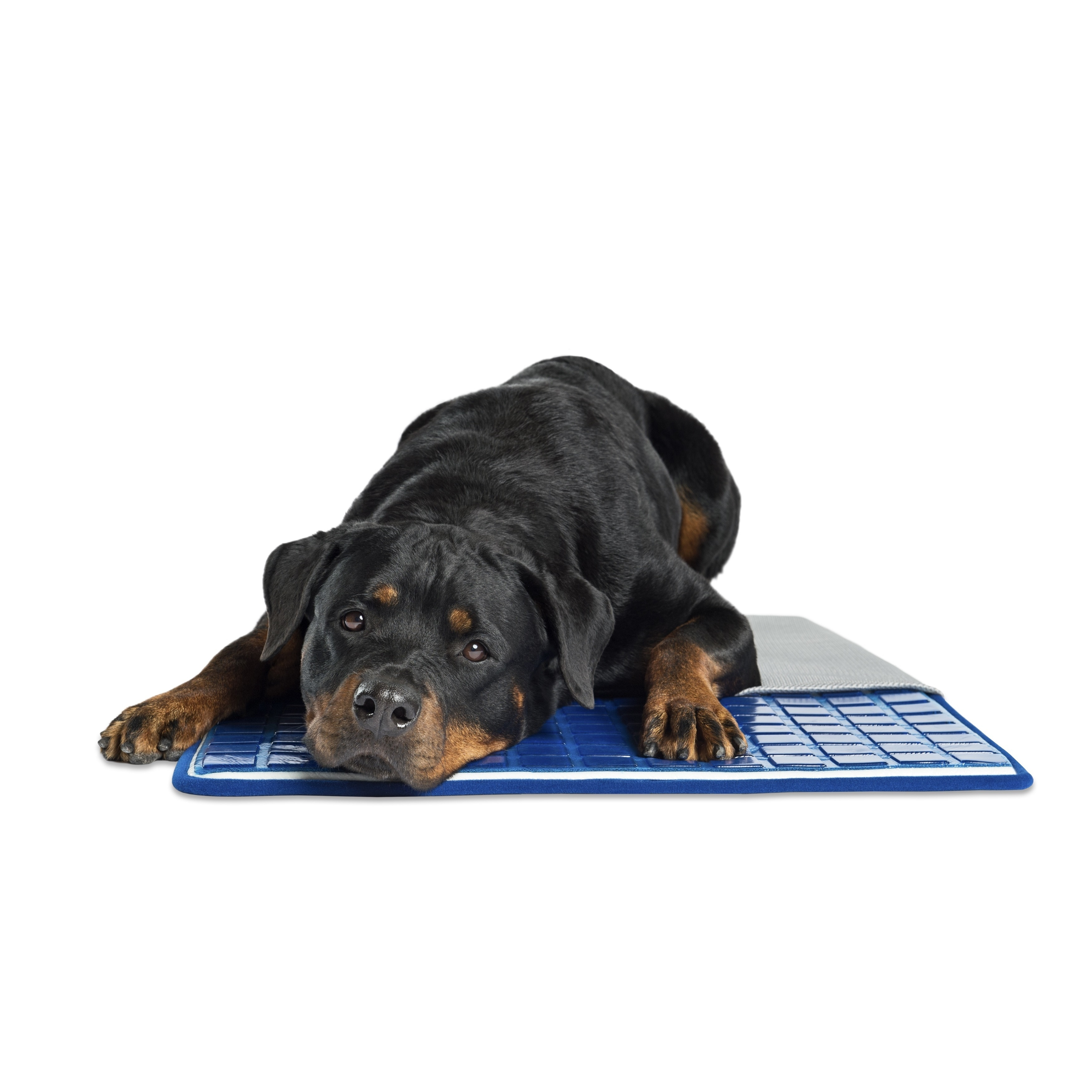 Pet Therapeutics TheraCool Gel Cell Cooling Pet Cushion (...