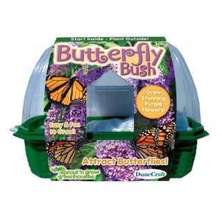 Sprout 'n Grow Greenhouse Butterfly Bush