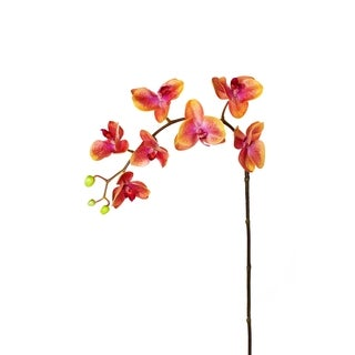 27-inch Phalaenopsis Orchid Spray (Pack of 6)