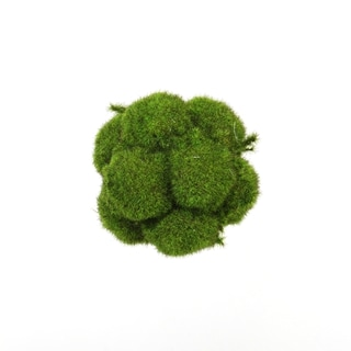 4.5-inch Mood Moss Orb (Pack of 8)