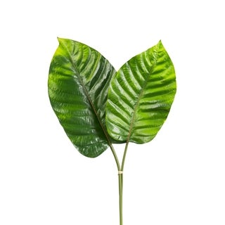 30-inch 2-flower Broad Leaf Philo Spray (Pack of 12)