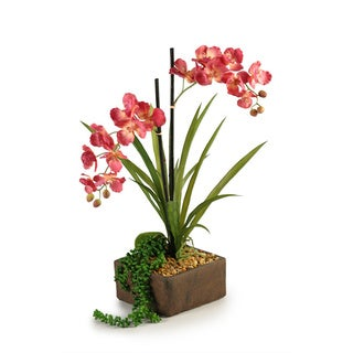 Mauce Vanda Orchids in Weathered Cement Planter