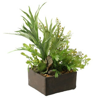 Mini Staghorn Fern and Flat Iron Fern in Cement Planter