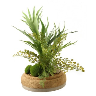 Mini Staghorn Fern with Flat Iron Fern in Cement Bowl