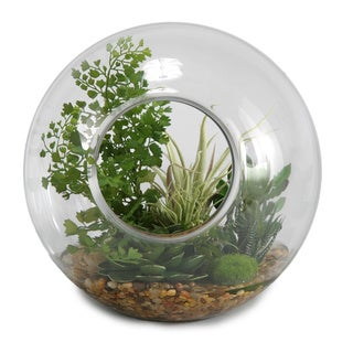Glass Sphere with Flat Iron Fern/ Easter Grass and Tilandsia