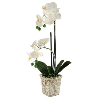 Cream Orchids in Crackle Finish Ceramic Planter