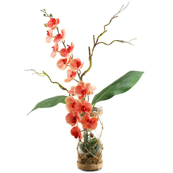 Shop Cream Red Phael Orchids In Glass Vase With Seagrass