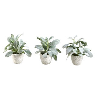 Frosted Lamb's Ear in Ceramic Pot (Set of 3)