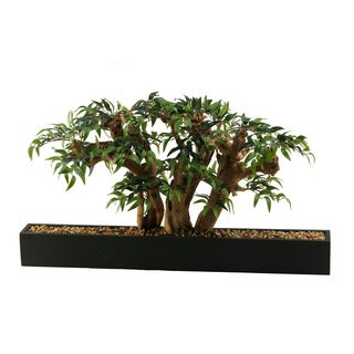 Ruscus Bonsai Tree in Long Rectangle Planter