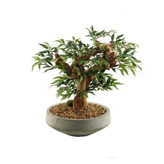 Mini Ruscus Bonsai Tree in Contemporary Concrete Bowl