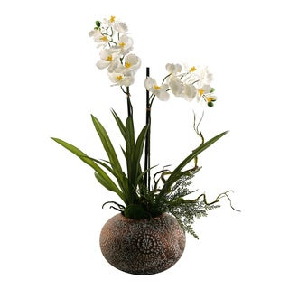 Cream Vanda Orchids in Ceramic Ball Planter
