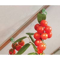 Palram Plant Hangers (Set of 10)