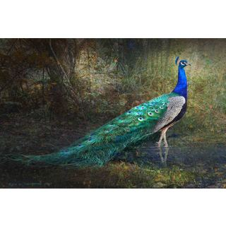 Marmont Hill 'Jungle Stream Peacock' by Chris Vest Painting Print on Canvas