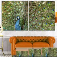 Designart 'Beautiful Peacock with Feathers' Animal Canvas Print
