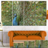 Designart 'Beautiful Peacock with Feathers' Animal Canvas Print - Green