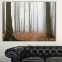 Designart 'Misty Autumn Beech Forest' Landscape Photo Canvas Print - Green
