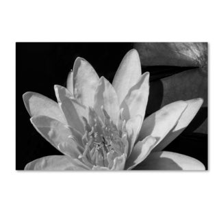 Kurt Shaffer 'Water Lily in Black and White' Canvas Art