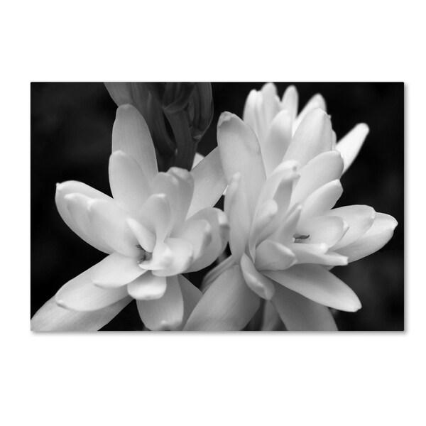 Kurt Shaffer 'Tuber Rose in Black and White' Canvas Art