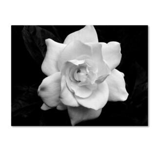 Kurt Shaffer 'Gardenia in Black and White' Canvas Art