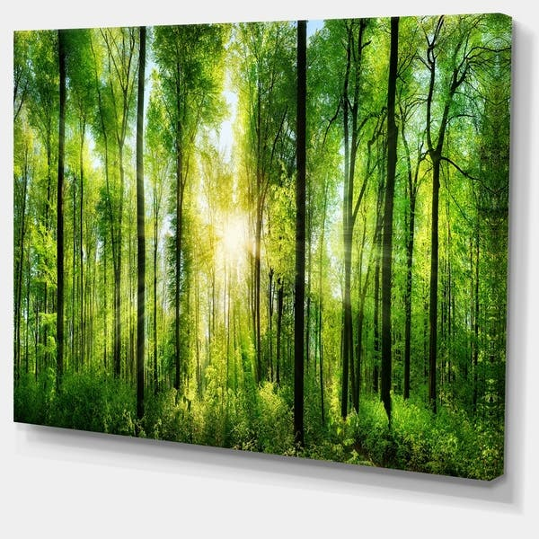 Designart Forest With Rays Of Sun Panorama Landscape Canvas Print On Sale Overstock 11664321