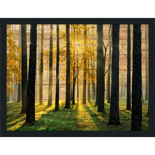 Many Paths' Giclee Wood Wall Decor