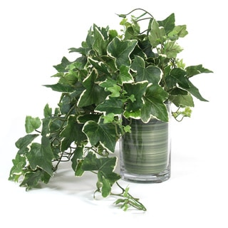Faux English Ivy Plant in Glass Vase