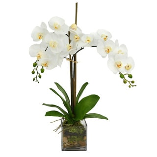 Silk White Orchid Floral in Glass
