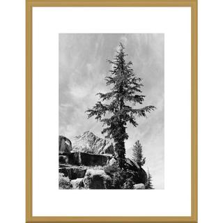 Big Canvas Co, Ansel Adams 'Tree and unnamed peak, Kings River Canyon, proposed as a national park,