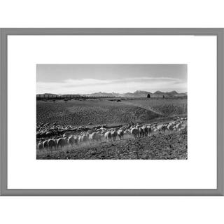 Big Canvas Co., Ansel AdamsAnsel Adams 'Flock in Owens Valley, California' Framed Art