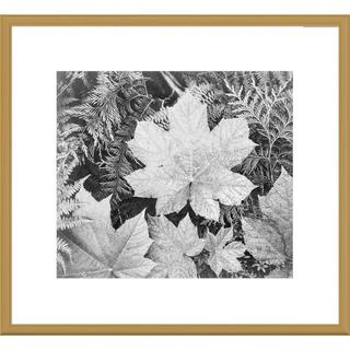 Global Gallery Ansel Adams 'Leaves, Glacier National Park, Montana' Framed Art