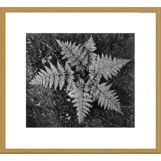 Big Canvas Co., Ansel Adams 'Ferns, Glacier National Park, Montana' Framed Art