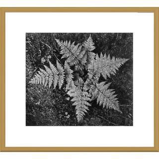 Global Gallery Ansel Adams 'Ferns, Glacier National Park, Montana' Framed Art