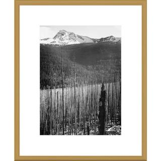 Big Canvas Co., Ansel AdamsAnsel Adams 'Burned Area, Glacier National Park, Montana' Framed Art