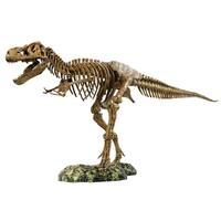 Elenco T-Rex Skeleton Kit