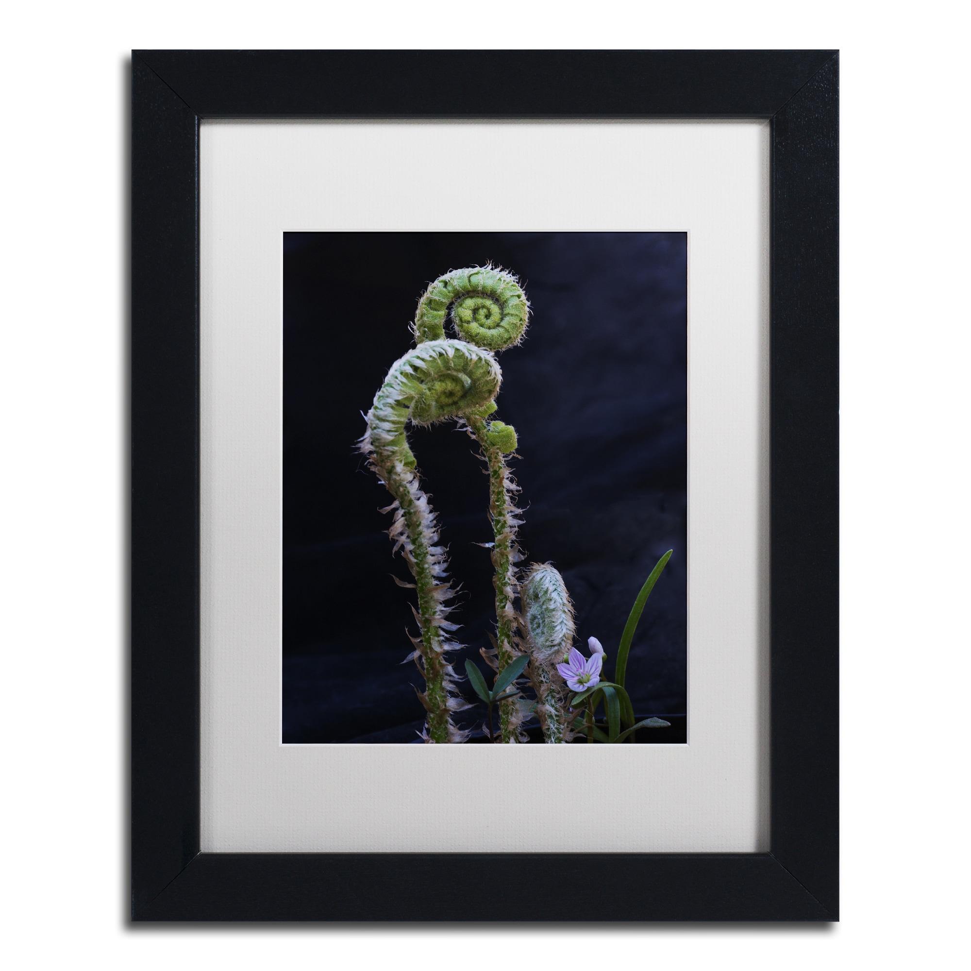 Trademark Kurt Shaffer 'Fern and Flower' Matted Framed Ar...