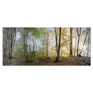 Designart 'Morning Forest Panoramic View' Landscape Photo Metal Wall Art